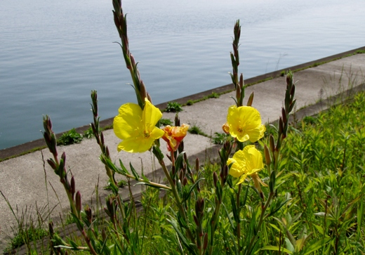 様々なところに癒しの花々が